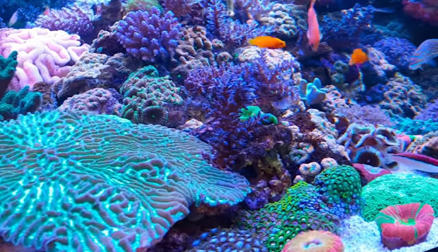 Information On How To Determine The Specifications Of The Aquarium Seawater That Is Right For Us To Enjoy In Your Own Home