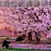 Cherry Blossom Forest Escape