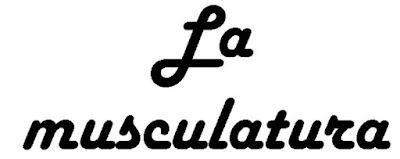 http://cplosangeles.juntaextremadura.net/web/edilim/tercer_ciclo/cmedio/las_funciones_vitales/la_funcion_de_relacion/la_musculatura/la_musculatura.html