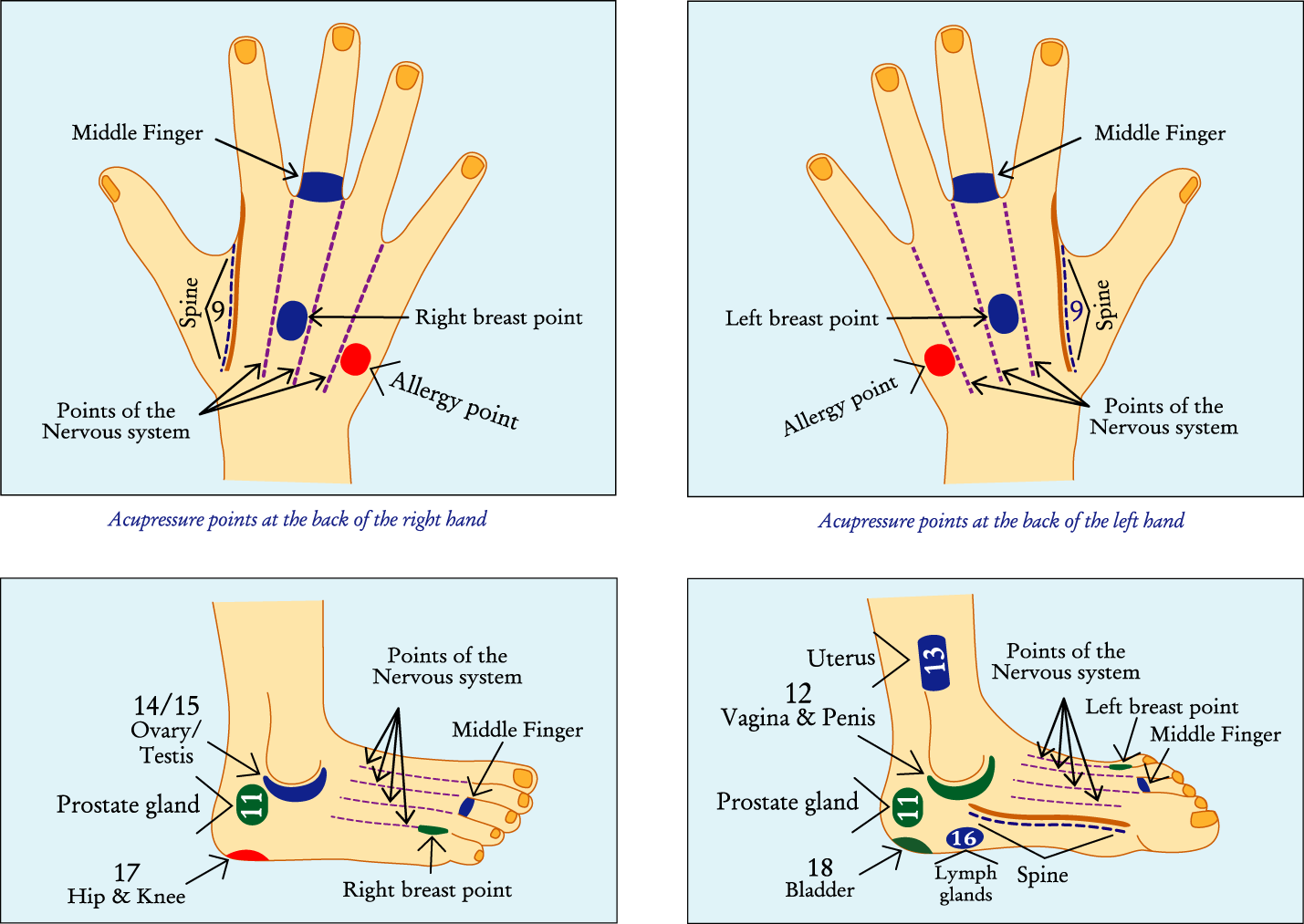 acupressure diagram of pressure points supra 2jz gte wiring cure without medicine march 2013