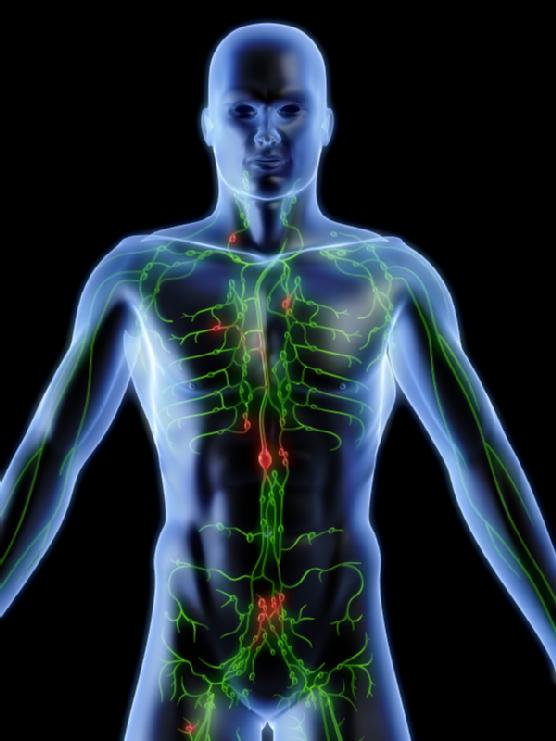 cuidados del sistema linfatico: septiembre 2016
