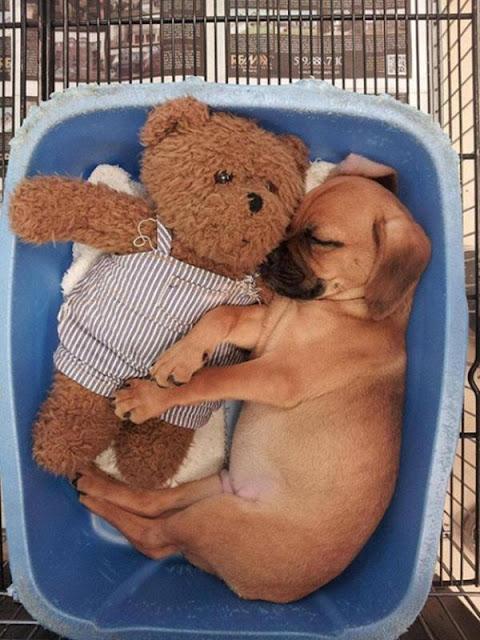 Những bé cún con đáng yêu tới nỗi bạn chỉ mong đừng bao giờ lớn