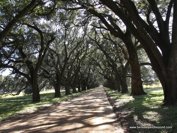 live oak allee at Evergreen Plantation in Edgard, Louisiana