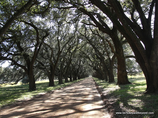 Sights to See: Evergreen Plantation, Edgard, Louisiana