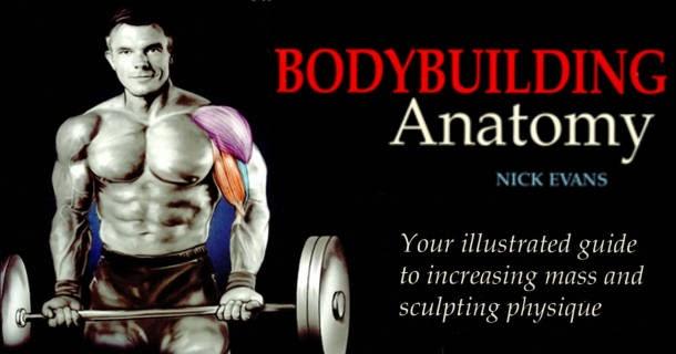 Bodybuilding Anatomy Nick Evans Pdf