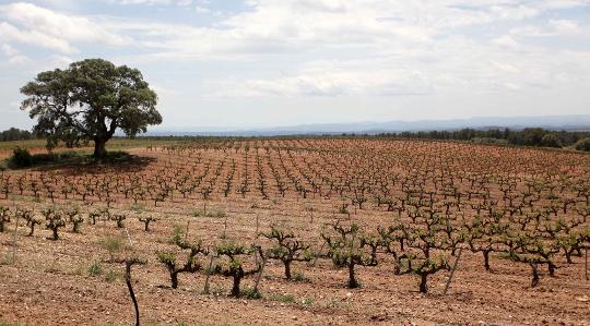 Un total de 48.555 agricultores y agricultoras presentan la Solicitud Única en 2019 en la Comunitat Valenciana