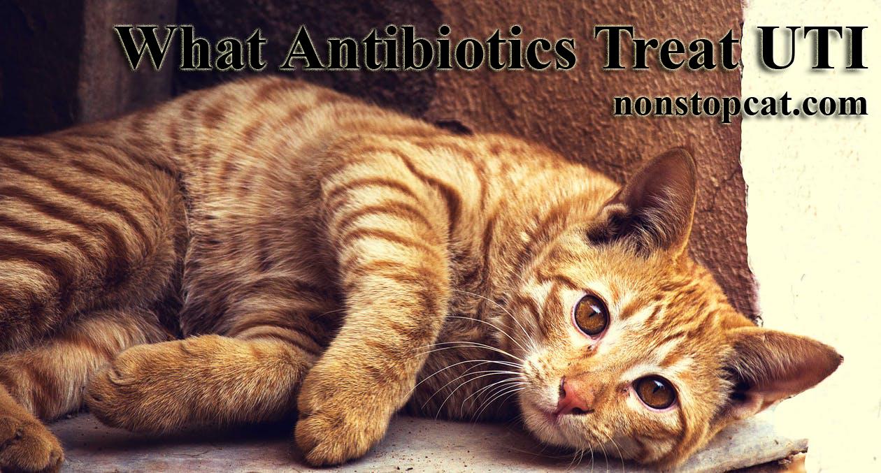 What Antibiotics Treat UTI