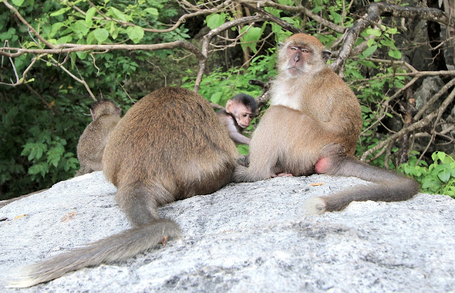 Monkey Island Wonderful Scenery Phi Phi Islands Travel Photography Guide Blogger in Thailand