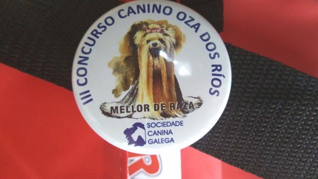 exposicion canina chihuahua