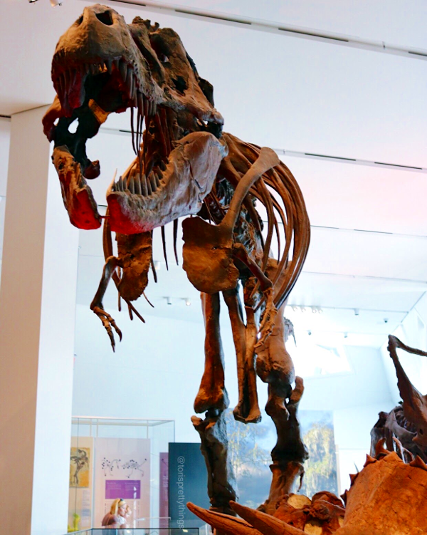T-Rex Replica - The Royal Ontario Museum - Tori's Pretty Things Blog