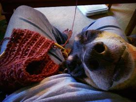 cuddly dog rescue knitting dog mom knit