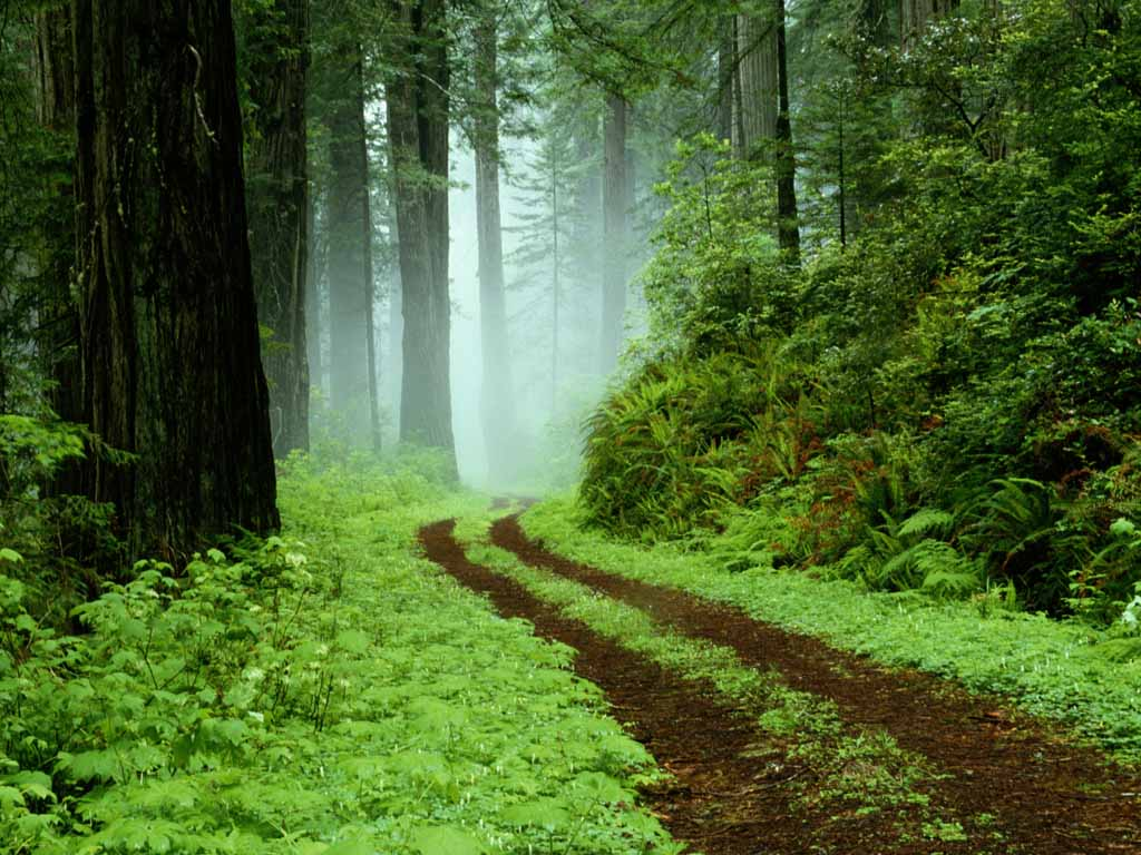 World Visits: Green Forest Best Wallpapers Images