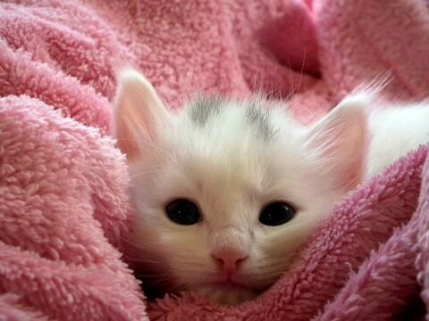 7 Cara Merawat Anak Kucing yang Baru Lahir Tanpa Induk ...