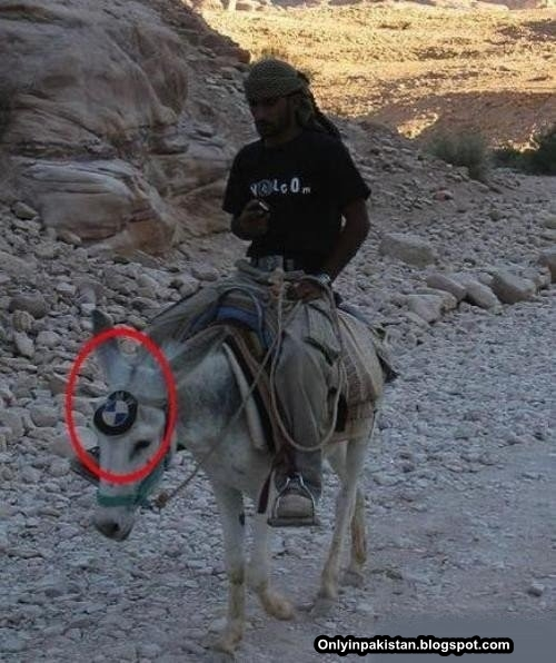 Funny Pakistani  donkey with Mercedes logo