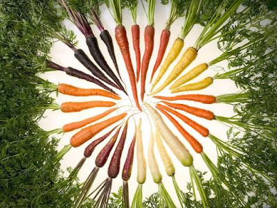 La carotte, ses bienfaits pour la santé sont nombreux