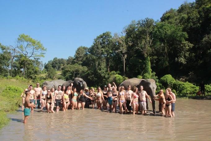 Elephant Jungle Sanctuary, Chiang Mai