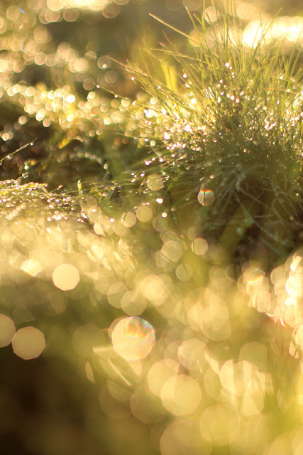 Bokeh Effect in the Grass - Dreamy Nature Photography by Mademoiselle Mermaid