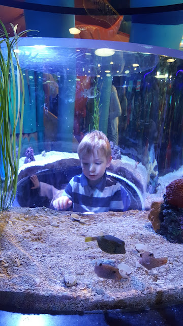 aquarium-play-area