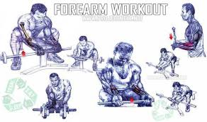 6 Exercises Forearm Muscle Building