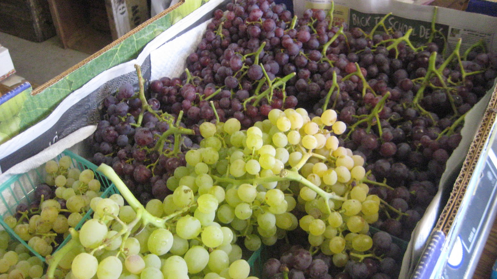 Otow Orchard Fruit Stand: Grapes