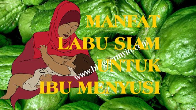 Rahasia Manfaat Labu Siam Untuk Ibu Menyusui Yang Masih Jarang Diketahui. Labu siam memang bukan salah satu sayuran favorit, namun tahukah Anda bahwa labu siam memiliki banyak manfaat untuk kesehatan. Salah satunya manfaat labu siam untuk ibu menyusui, selain itu labu siam juga baik dikonsumsi untuk ibu hamil.  Sayuran yang bisa Anda temukan di pasar-pasar tradisional ini tergolong sayur yang relatif murah, namun sayur berwarna hijau ini termasuk makanan yang sehat untuk jantung serta baik untuk menangkal resiko terkena kanker.  Labu siam ditemukan pertama kali oleh Patrick Browne pada tahun 1756 di Jamaika dna sekarang banyak ditanam di di kawasan Malaysia, Filipina dan Indonesia. Akan tetapi labu siam sendiri sebenarnya berasal dari negara tetangga yaitu Thailand yang berada di wilayah Siam.  Labu siam atau jipang nama istilah di Jawanya ini masih tergolong keluarga cucurbitaceae dan masih masuk di keluarga dengan labu kuning dan mentimun. Nama ilmiahnya labu siam sendiri adalah sechium edule.  Seperti dalam sebuah penelitian yang pernah dilakukan oleh Universitas North Florida ternyata labu siam memiliki banyak kandungan vitamin, selain itu labu siam juga mengandung nutrisi yang baik untuk tubuh. labu siam adalah sayuran berbentuk oval yang menyerupai buah pear yang juga rendah kalori, namun tinggi akan serat dan mineral.  Lalu manfaat labu siam untuk ibu menyusui, apakah Anda sudah mengetahuinya? Namun sebelum membahas mengenai manfaat labu siam untuk ibu menyusui, berikut ini adalah kandungan gizi dan vitamin yang baik untuk kesehatan diantaranya yaitu mengandung energi, kaya akan serat. Selain itu labu siam juga mengandung vitamin seperti asam folat, kalsium, magnesium, fosfor dan vitamin lainnya. Lihat juga postingan lainnya tentang 6 Manfaat Labu Siam Untuk Ibu Hamil yang wajib Anda ketahui  Manfaat labu siam untuk ibu menyusui, Selain bisa membantu dan mendukung perkembangan bayi dalam perut ibu hamil, labu siam juga sangat bermanfaat untuk ibu menyusui sep