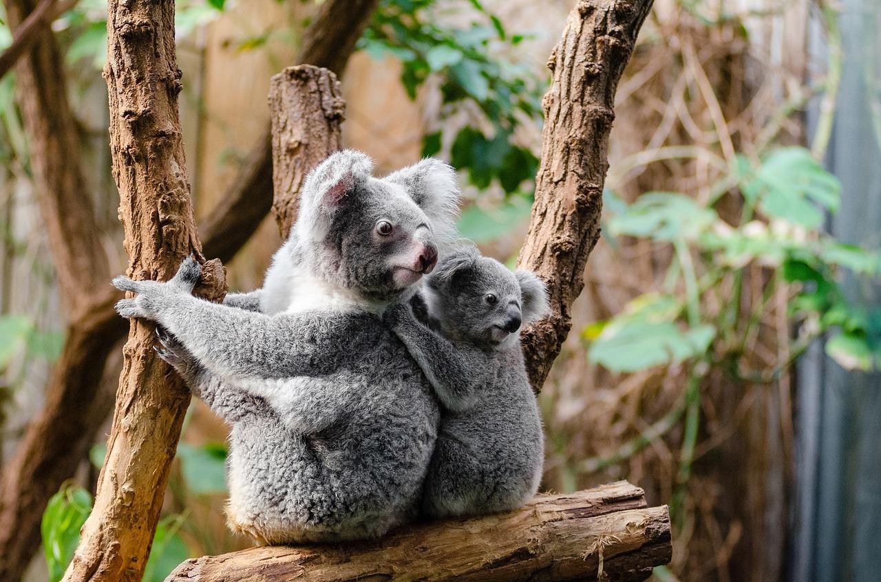 黃金海岸-景點-推薦-庫倫賓野生動物園-Gold-Coast-Attraction-Currumbin-Wildlife-Sanctuary-Tourist-destination