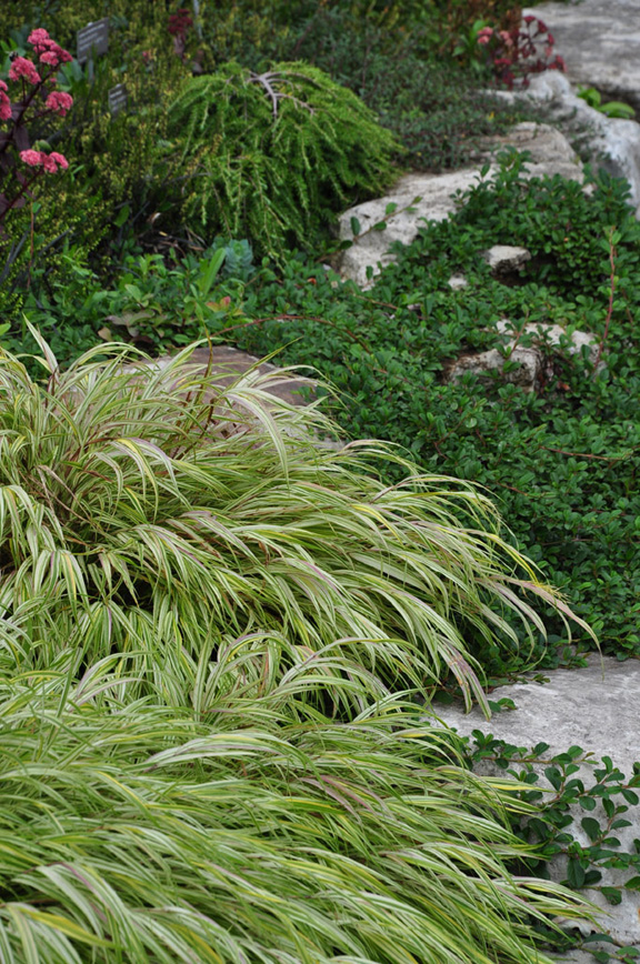 Three Dogs in a Garden: Favourite Ornamental Grasses, Part