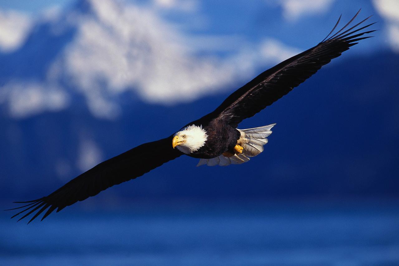 Blog De Frases E Pensamentos Como A águia