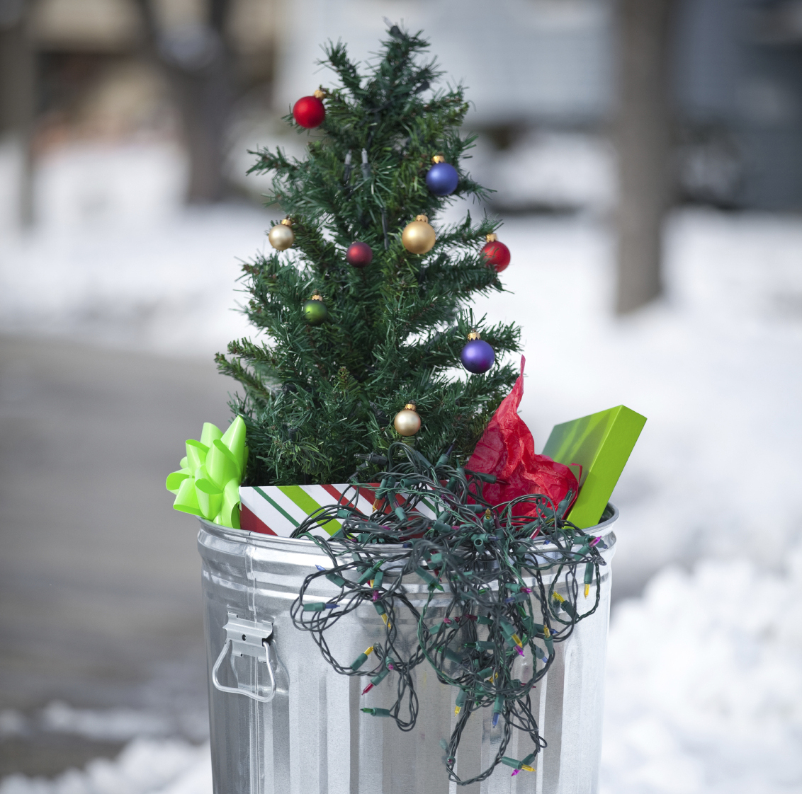 Chistmas Trees: Got Compost