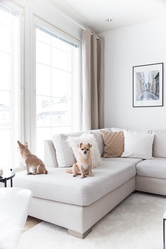 Villa H, chihuahua, koirat, olohuoneen sisustus, olohuoneen verhot