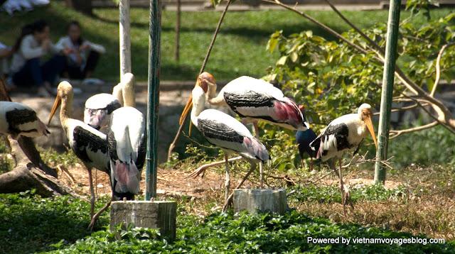 Saigon Zoo - Photo by An Bui