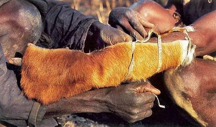 "Brave Africans catch a python ""Live Bait"""