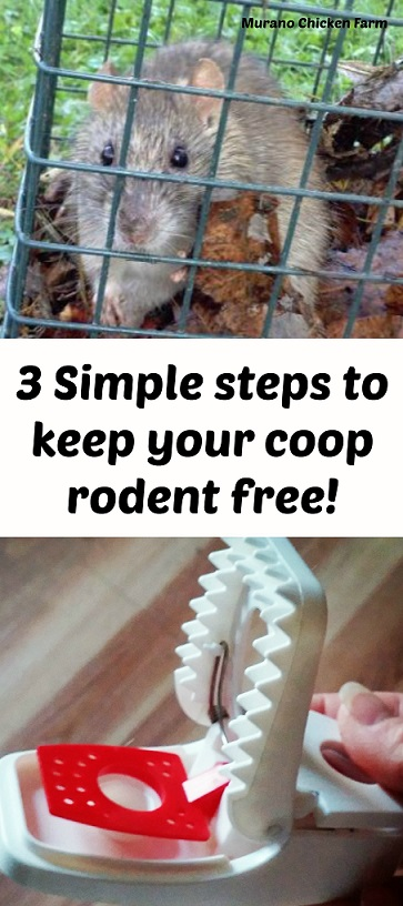 feeder coops feeders rodent chicken accessories large best proof images on coop pinterest