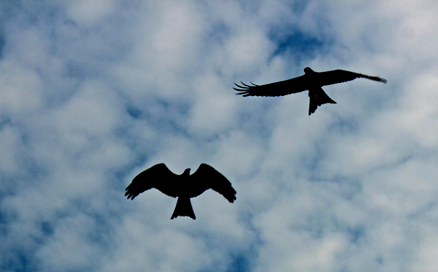 silhouettes of birds against a blue sky
