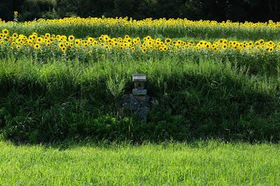 長野県生坂村の古民家カフェ ひとつ石 守り神?の石祠とひまわり