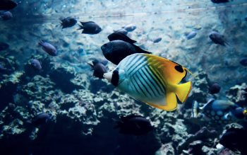 Wallpaper: Tropical Fish