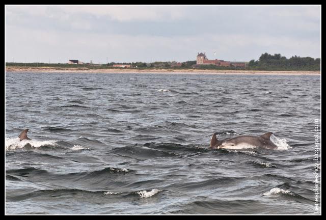 Delfines en Chanorny Point (Escocia)