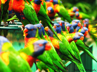 imagenes de loros coloridos