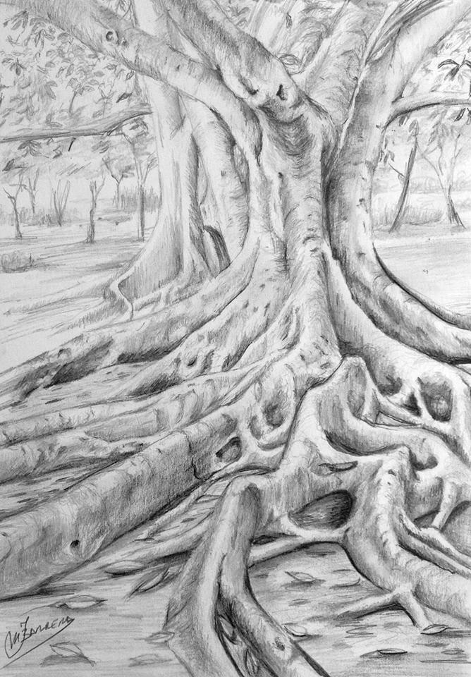 O To Ww Bing Comsquare Root 123: Cuaderno De Apuntes: Dibujo De Ficus A Grafito, Paso A Paso