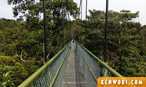 singapore macritchie park treetop walk