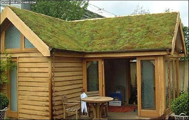telhado com musgo
