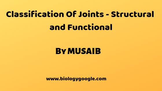 Classification Of Joints - Structural and Functional