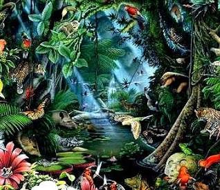 Seres vivos en bosques tropicales