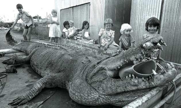 Monster crocs: in Animal vs Animal Forum