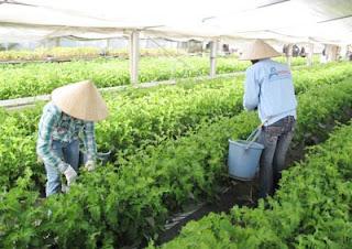 lao động hàn quốc, cuộc sống củ người lao động nông nghiệp tại nhật bản