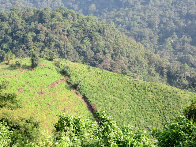 Rolling hills leading to Bwindi Impenetrable Forest in Uganda
