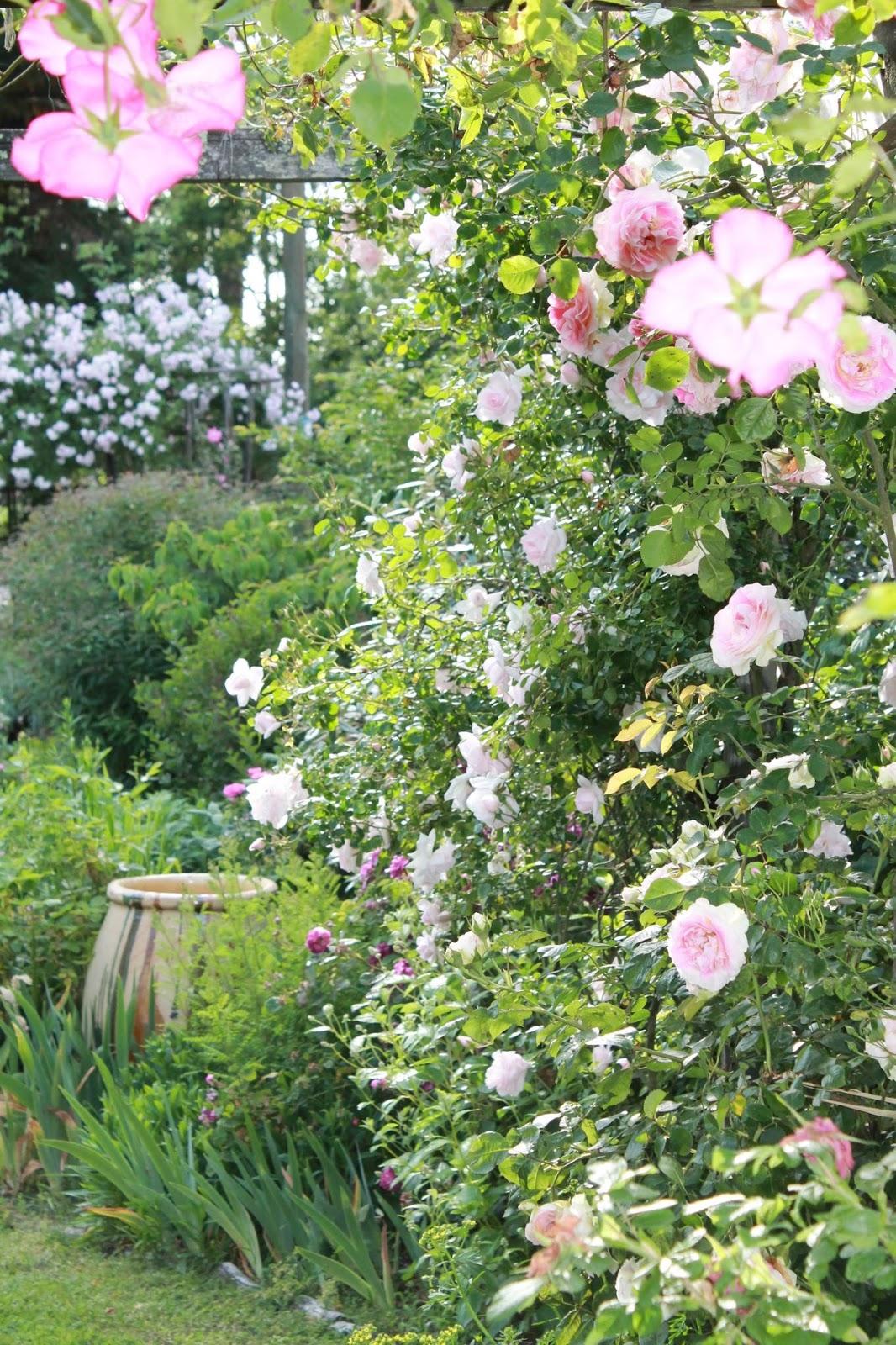 Promesse de roses rendez vous aux jardins 2016 for Rendez vous des jardins