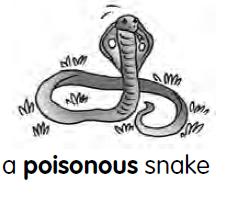 Poisonous Snake