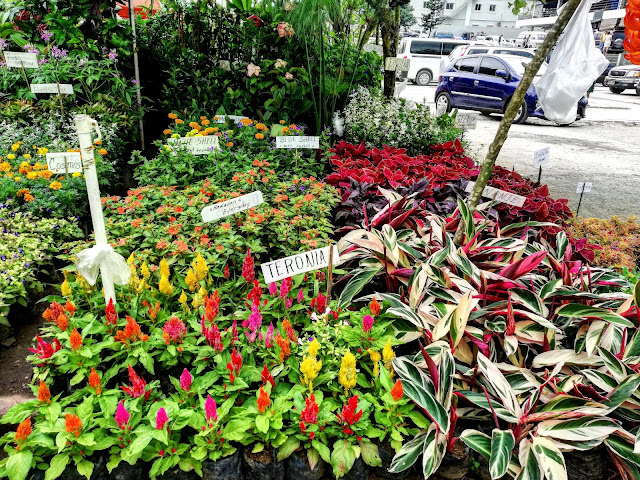 Mahogany Market Tagaytay Plants for Sale