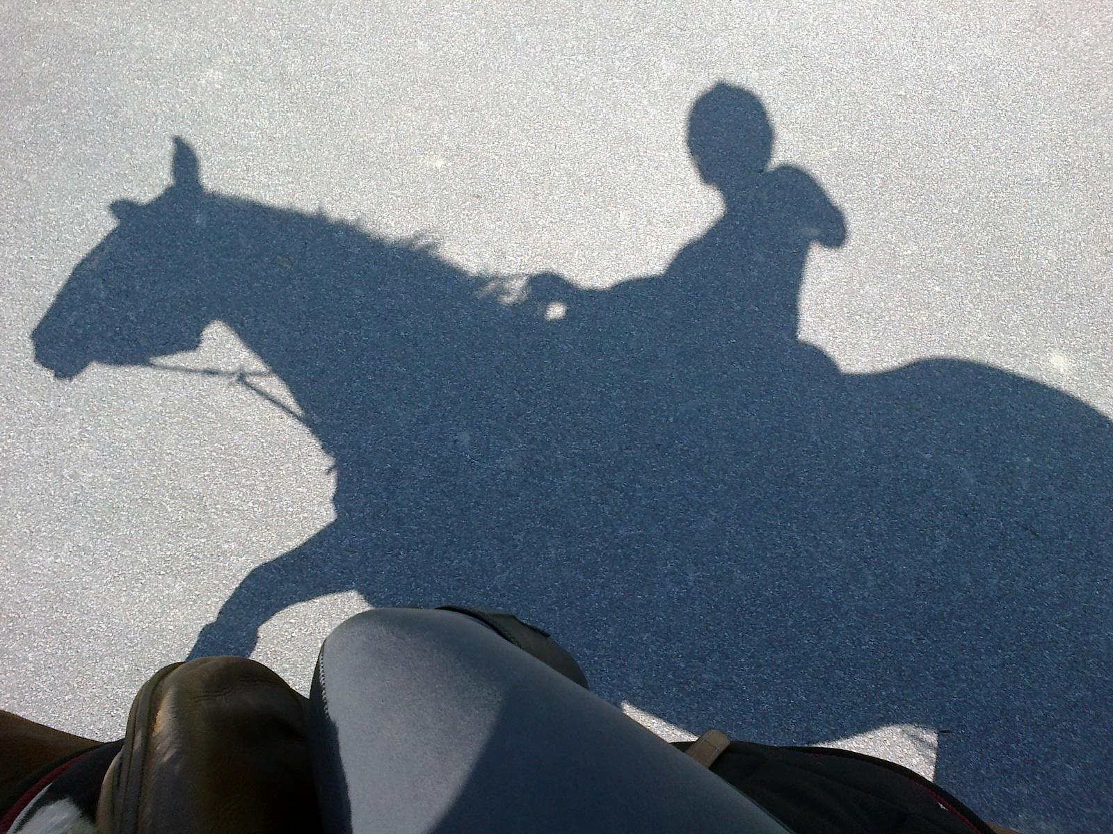 Hevosenhoitajan Palkka